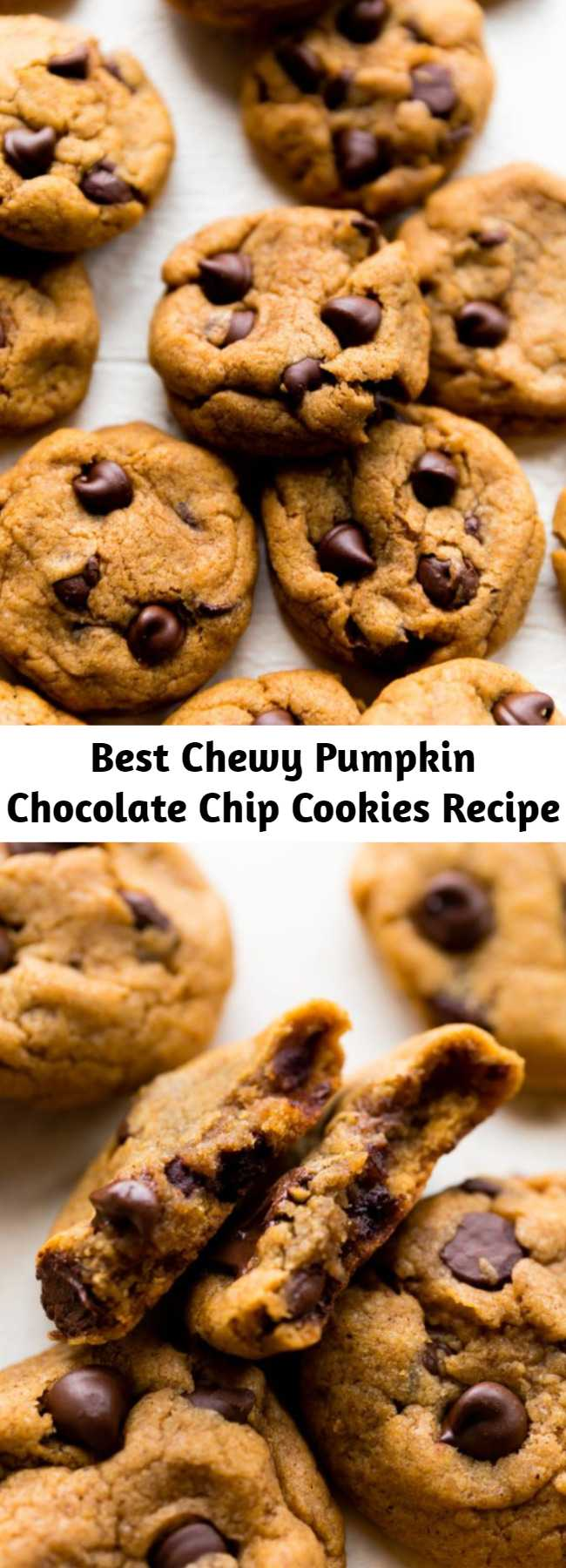 Best Chewy Pumpkin Chocolate Chip Cookies Recipe - I'm confident you'll love these pumpkin chocolate chip cookies! Omitting the egg, using melted butter, and blotting the pumpkin guarantee a chewier texture.
